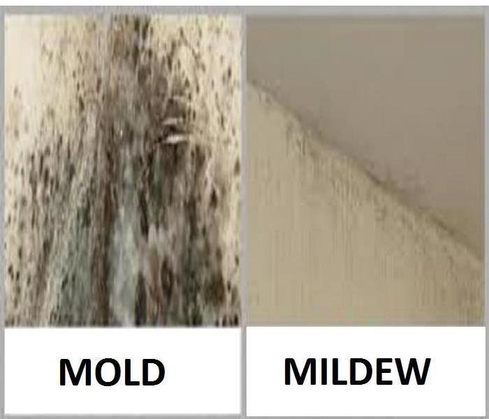 mold vs mildew servpro of southeast milwaukee county. Black Bedroom Furniture Sets. Home Design Ideas